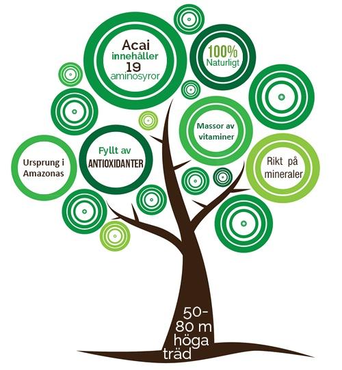 Infographic med fakta om superfrukten acaibar. Bilden är formad som ett trad