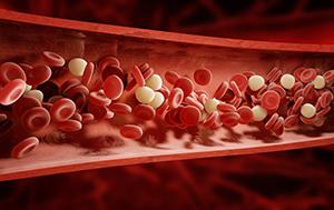 Vad är blodcirkulation