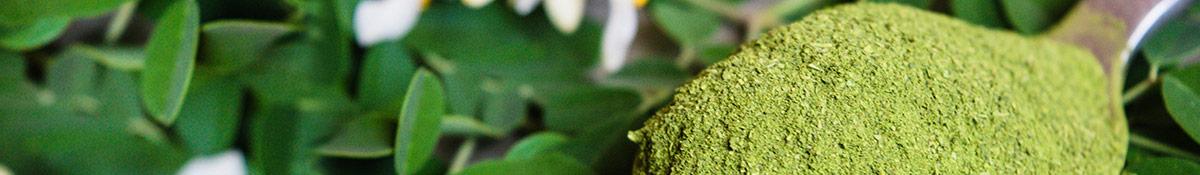 Bildrubrik for Super Moringa med Moringapulver och blad mot en gron bakgrund