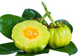 garcinia cambodia frukter varav en ar delad pa halften pa flera grona blad mot en vit bakgrund