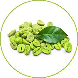 grona kaffebonor. Green coffee pure, mot vit bakgrund