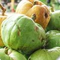 Garcinia Cambogia dämpar aptiten