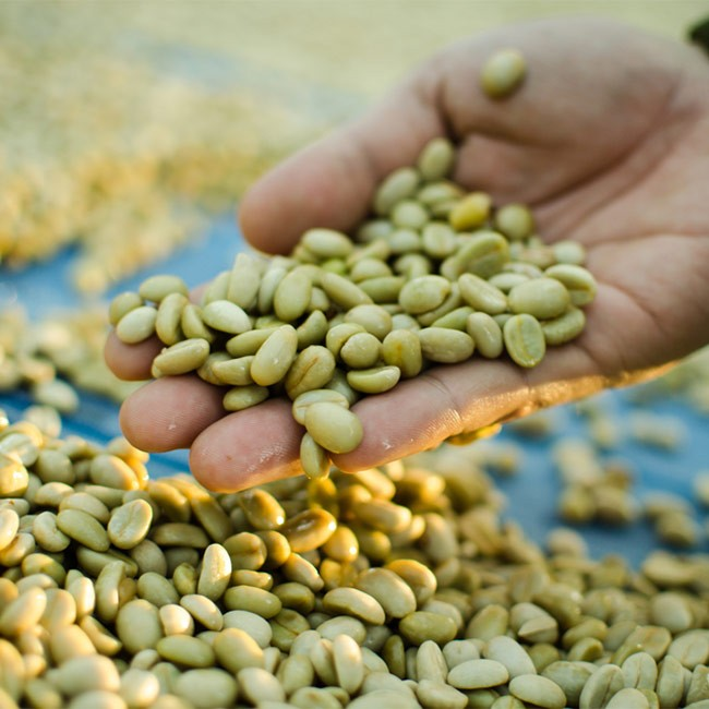 Vad är fördelarna med Grönt kaffe?