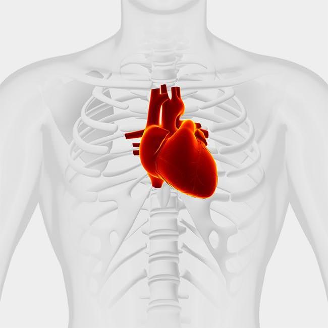 Varför är blodcirkulationen viktig?
