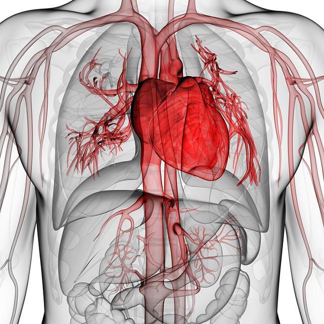 Vad kan påverka blodcirkulationen?