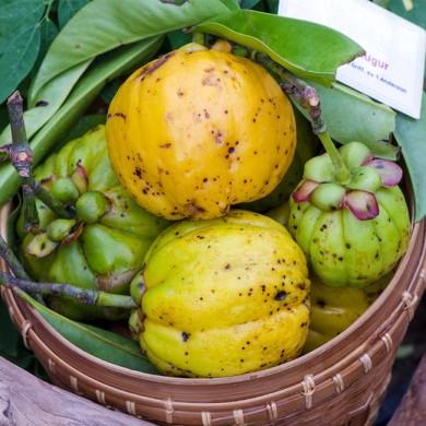 Fem fördelar med Garcinia Cambogia