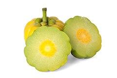 garcinia cambogia färsk frukt